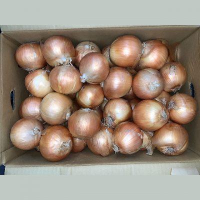 北海道産 玉ねぎ Lサイズ10kg